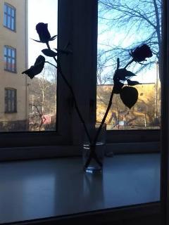 garden view from kitchen window