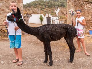 Experience Alpacas in Rural Spain - As Seen on UK TV!