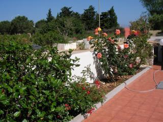 -Giardino- aiuole fiorite