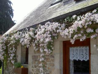 Beautiful clematis in springtime framing your cottage