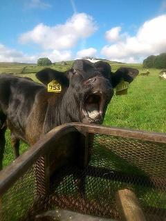 its a hard life on the farm!