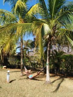 A l'ombre des palmiers vous pourrez vous reposer
