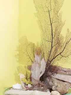 Sea Fan and Drift Wood