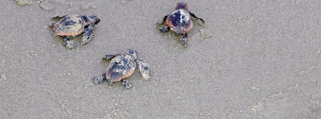 Tortoise,Turtle,Outdoors,Sand