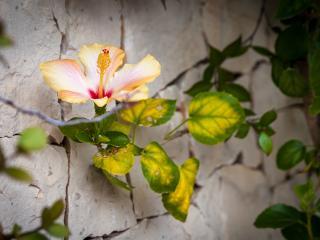 Casa Vacanze Hibiscus, Marina di Modica