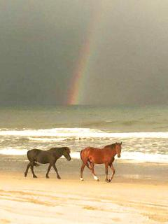 Just 3.5 miles north, there are the historically famous Corolla horses.