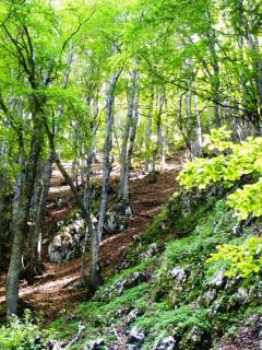 Beech forests in the summer