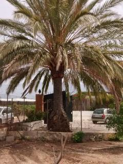 Huge palm tree makes the cortijo easily identifiable!