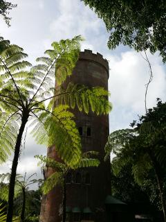 Yokahu Observation Tower In El Yunque Rain Forest