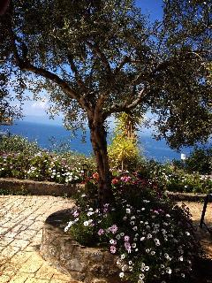 Garden with sea view