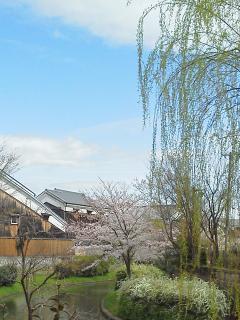 Sakura with traditional houses