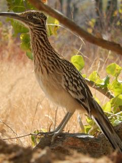 Our resident road runner might visit the palm grove, while you're on the porch!