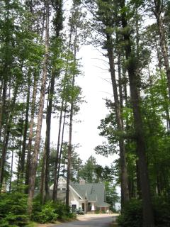 Very Tall trees on our land!
