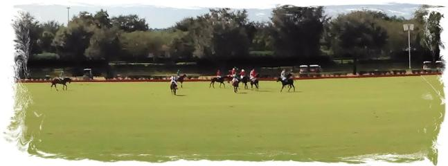 Watch a polo match at The Villages.