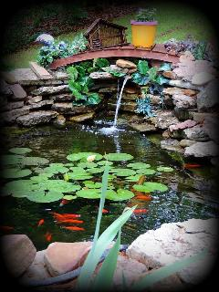 The pond in the garden area. Meet Bella the bluegill and her goldfish friends!!