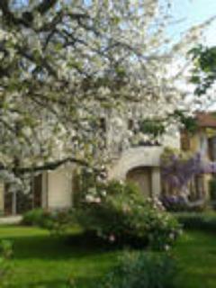 giardino con ciliegio in fiore