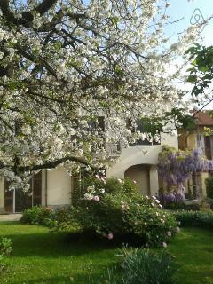 ciliegio fiorito in primavera