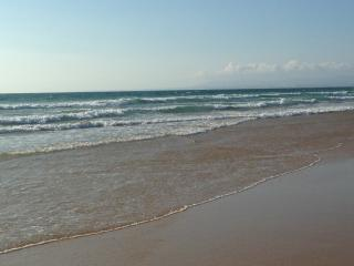 Beach, nature, sea and wild Caparica, Costa da Caparica