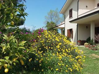 Un angolo di giardino.