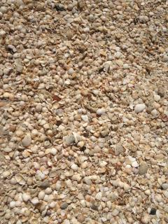 North Beach abundant with shells