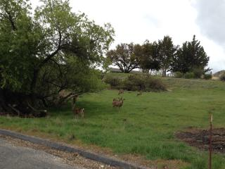 Don't be surprised to be greeted by a herd of deer.  Wild turkeys and quails also visit.