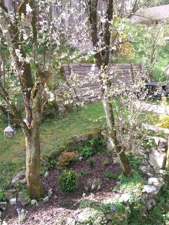 view to the garden from the balcony