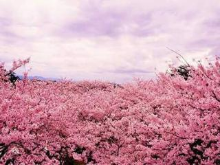 2mins walk from Hankyu ARASHIYAMA, Kioto