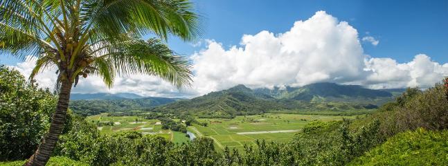Hanalei Taro Fields