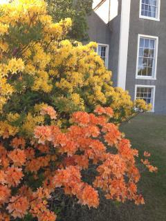 Springtime at Ardlamont