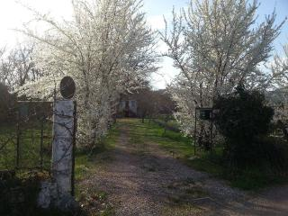 Entrance to the property, bordered by fruit trees and lavender