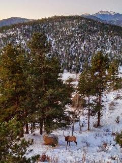 Bull elk below the deck!