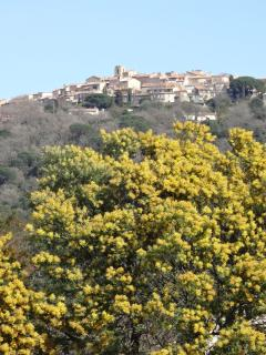 view of Gassin in February with Mimosa flowers