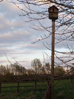 You might spot the barn owl