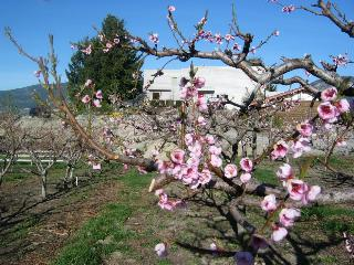 Bench side of villa Orion: our peach orchard in front of our high end villa.