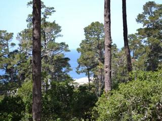 3702 Cypress by the Sea ~ Distant Ocean Views ~ Magical Setting, Carmel