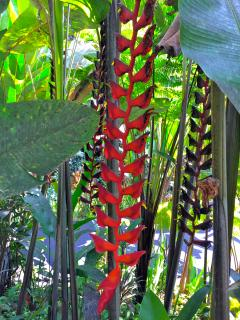 The Botanical gardens offer such an amazing abundance of well thought out plant species