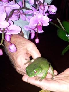 Guest holding dear little Green Tree Frog.