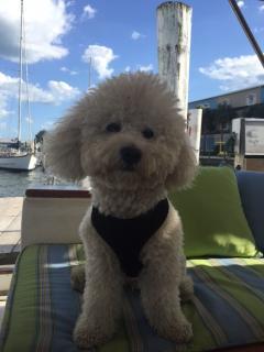 Skipper on watch