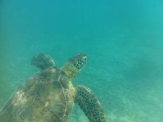 Turtles, Dolphins, condo on Gran Bahia Property, Akumal
