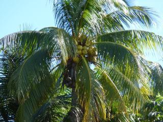 5BR Villa Lazarra, Miami Beach