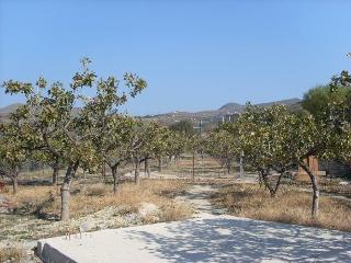 Aegina mountain aromas, Aegina Town