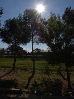 Il sole tra i pini del viale