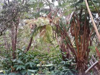 Private Kilauea Hideaway - Only 2 minutes from National Park !