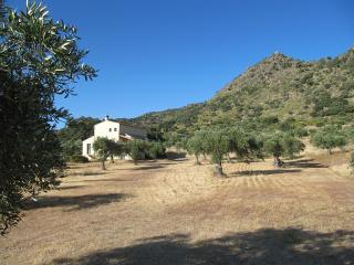 House with private pool in gorgeous olive grove, Montanchez