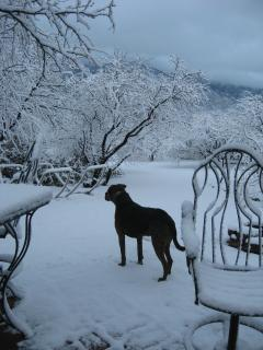 Deuce, the friendly yard dog checks out the rare snow storm