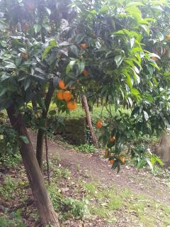 Pick some oranges and we'll make you your own hand chosen fresh Sorrento-orange juice.
