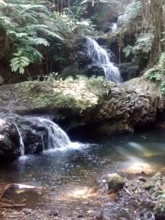 Water falls at the botanical gardens