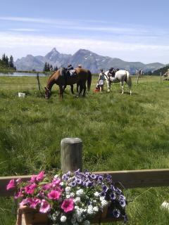 horse riding in the summer /Grand Massif Haute Savoie French Alps