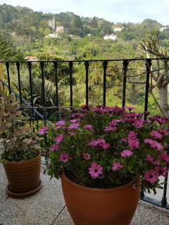 Casa da Fonte - Apartments in Sintra _ View from terrace