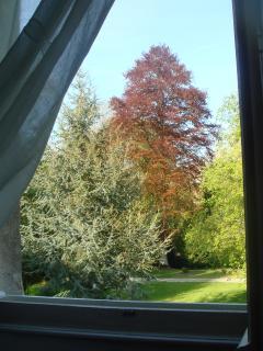 vue de la salle de bain sur les grand arbres
